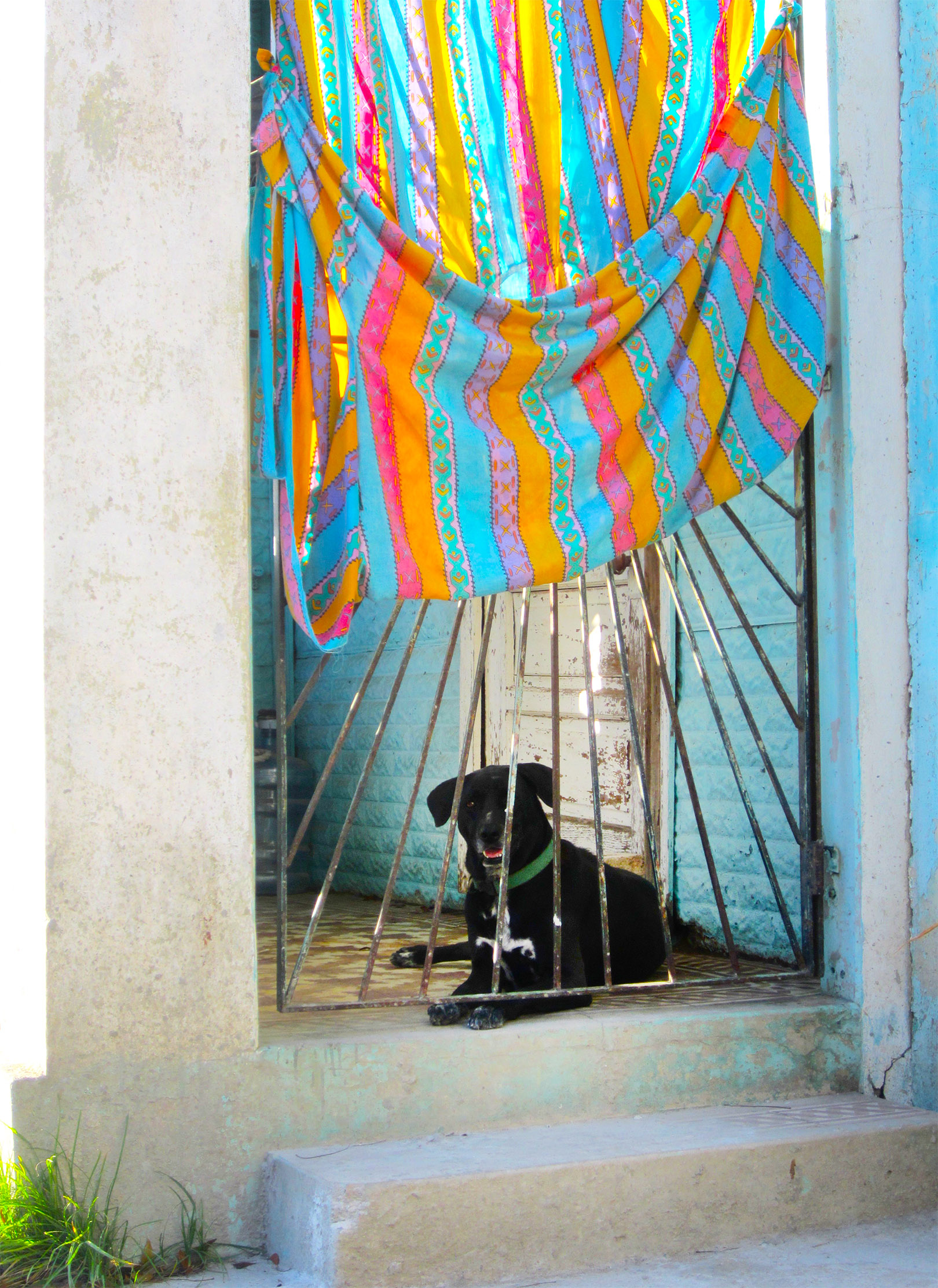 A Dog Resting on the Patio of a Home in Vieques, Puerto Rico